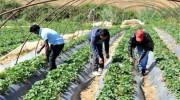 Εγκύκλιος:Τι ισχύει για την ασφάλιση αγροτών ( Πρώην ΟΓΑ)  στον ΕΦΚΑ