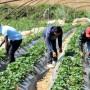 Βεβαίωση ΕΦΚΑ για φορολογική χρήση έτους 2017 για εργάτες γης (π. ΟΓΑ)
