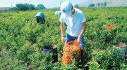 Έναρξη και διακοπή της ασφάλισης στον ΕΦΚΑ των ασφαλισμένων του Κλάδου Κύριας Ασφάλισης Αγροτών του π. ΟΓΑ