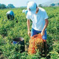 ΕΦΚΑ: Συντάξεις αγροτών γεννηθέντων το 1950