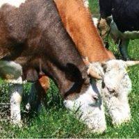Ασφάλιση ζωικού κεφαλαίου από την Interamerican